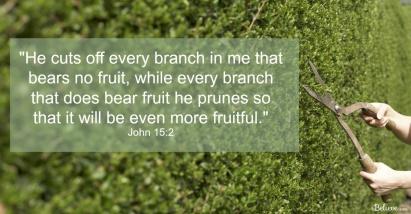 pruning1